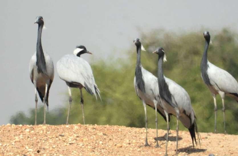 Murder of birds- यहां गजब खेल हो गया, बबलू और बल्लू के पेंच में पक्षियों का हत्यारा ऐश कर रहा