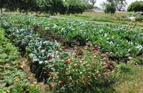 पढ़े, स्कूलों में न्यूट्रीशियन गार्डन बनाने की तैयारी ताकि बच्चों को मध्याह्न भोजन में मिले ताजी सब्जियां