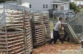 बीच हाईवे गिर गए डेढ़ लाख अंडे, ड्राइवर को नहीं लगी जरा-भी भनक