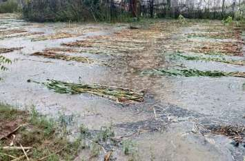 नवलगढ़, पचलंगी, मुकुंदगढ़, पिलानी व चिड़ावा में बरसात