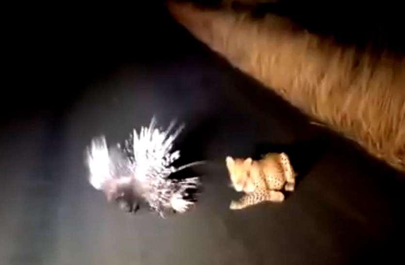 video: खूंखार तेंदूआ के हमले से स्वयं की रक्षा का अलहदा अंदाज