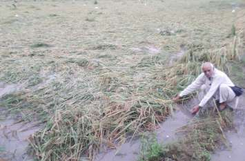 टिड्डियों के हमले ने बढ़ाई किसानों की चिंता