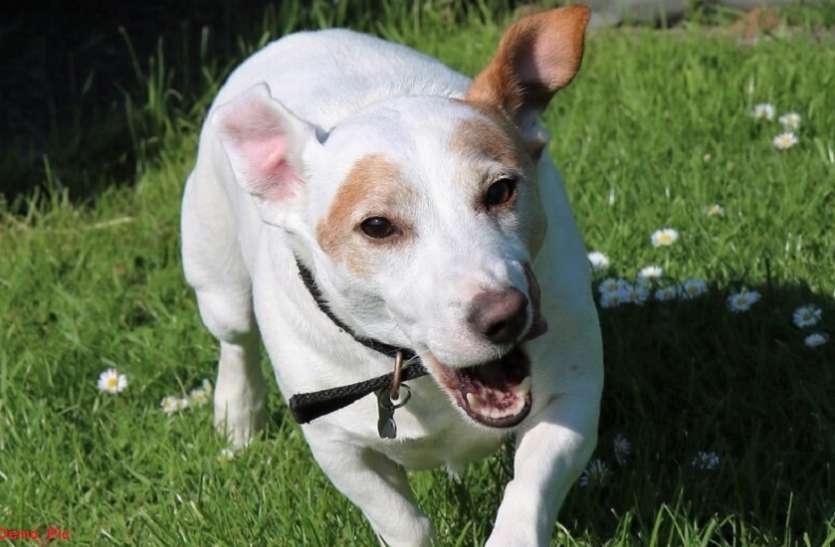 OMG! नशे की हालत में महिला ने कुत्ते को कल्हाड़ी से बुरी तरह पीटा, हो गई है ऐसी हालत