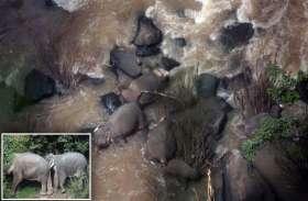 थाईलैंड : पहाड़ी पर फंसे हाथियों को बचाने गए पशु चिकित्सकों की टीम को निकाला गया