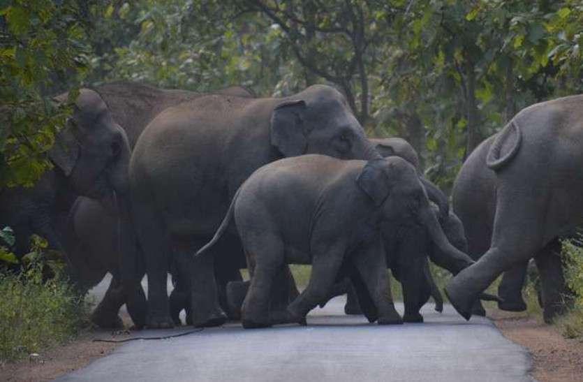 बच्चे को बचाने के चक्कर में जान गंवा बैठे छह हाथी
