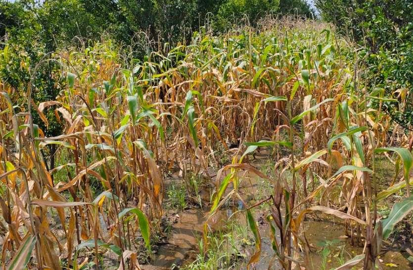 खेतों में नुकसानी का नहीं हो रहा सर्वे