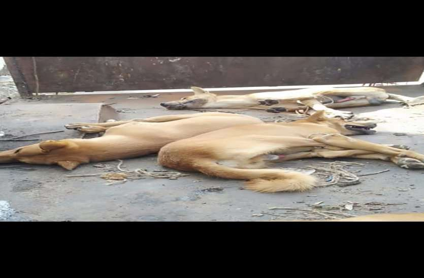 बेजुबान कुत्तों की कर दी थी निर्मम हत्या, लोगों का गुस्सा भड़का तो अब पुलिस ने उठाया ये कदम