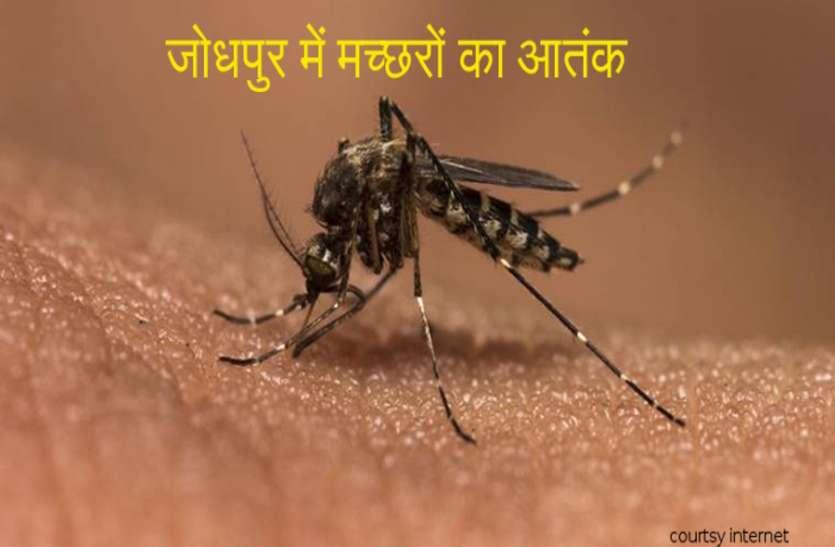 जोधपुर में नहीं थम रहा मच्छरों का आतंक, एक ही दिन में सामने आए डेंगू के17 और टाइफाइड के 15 मामले