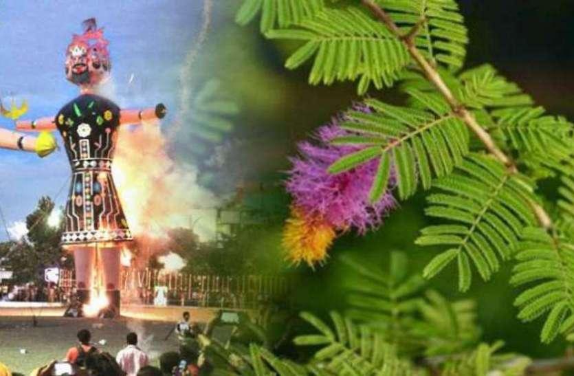 दशहरे के दिन करें इस पौधे की पूजा, 10 जतन जिनसे नहीं होगा धन का आभाव