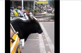 Watch Video: चालान का ऐसा डर, जानवर भी मानने लगे ट्रैफिक नियम! देखें वीडियो