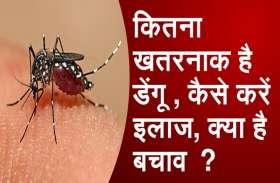 भोपाल में सात दिन में मिले डेंगू के 90 मरीज, आप भी हैं पीड़ित तो घरेलू उपायों से ऐसे करें बचाव