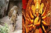 अष्टमी के दिन मां दुर्गा की पंडाल के पास दिखे दो तेंदुए, आसपास गांव में मचा हड़कंप
