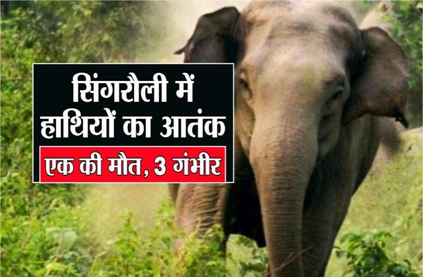 छत्तीसगढ़ के हाथियों ने सिंगरौली में मचाया आतंक, 1 की मौत, 3 गंभीर, कलेक्टर और डीएफओ ने गांव में डाला डेरा
