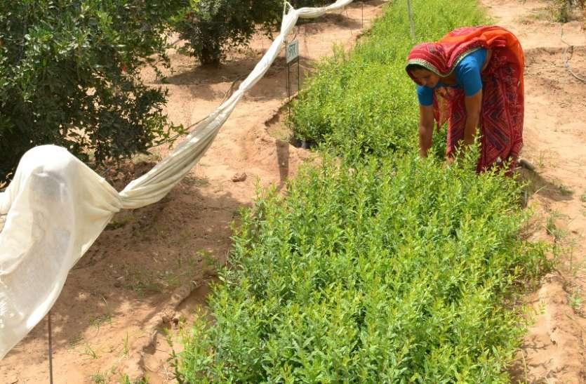 PM-Kisan : किसान को आधार से जोडऩे की अवधि बढ़ी