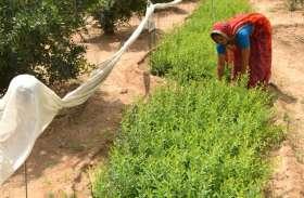 यूपी के दो दो दिग्गज मंत्रियों के जिले में दो लाख अन्नदाता पीएम किसान योजना से हो जाएंगे वंचित