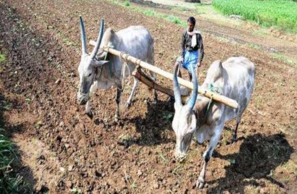 कुदरत और सिस्टम की मार से जूझ रहा यूपी किसान, बढ़ रहे सुसाइड के मामले