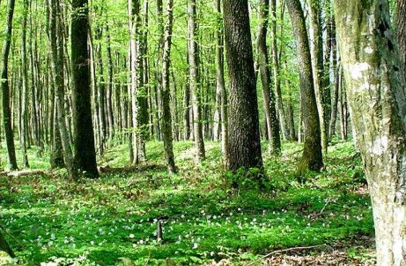 इस तकनीक से 10 गुना तेजी से बढ़ सकते हैं जंगल