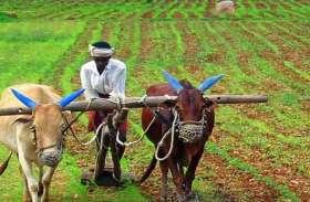 नुकसान से बचने के लिए किसान करते हैं यह काम