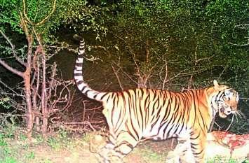 6 साल से फरार चल रहे अंतर्राज्जीय बाघ शिकारी को एसटीएफ ने गुजरात से पकड़ा