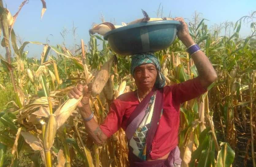 पुरूषों से कम नहीं है अमहा टोला की आदिवासी महिला कृषक