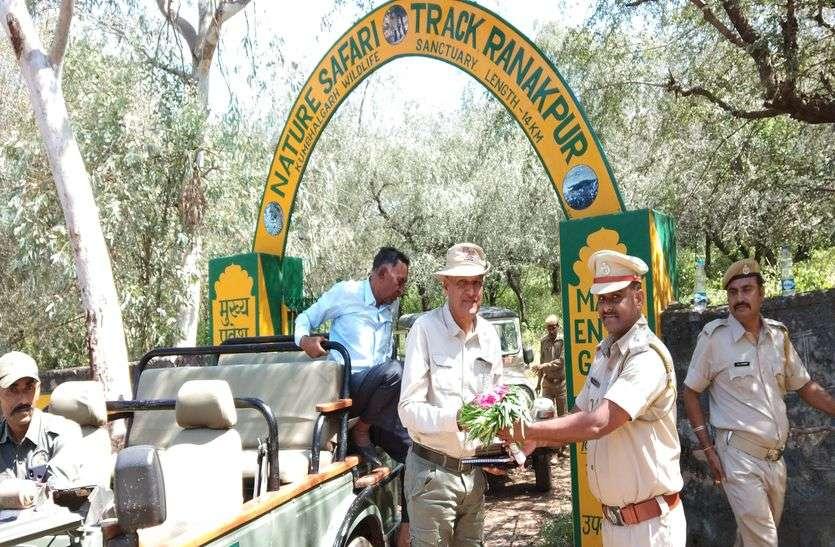 कुंभलगढ़ वन्य जीव अभयारण्य में जल्द सुनाई देगी बाघ की दहाड़!