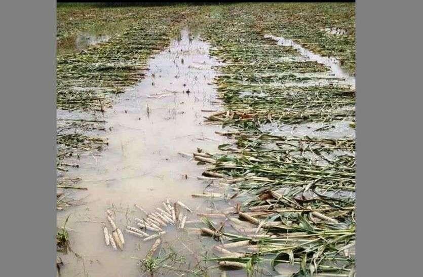 बेमौसम बारिश से 60 हजार हैक्टेयर से ज्यादा क्षेत्र में खराबे का अनुमान