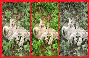 7 मुंह वाले सांप की खाल दिखने पर इस गांव में मची अफरा-तफरी, जानें क्या है सच्चाई