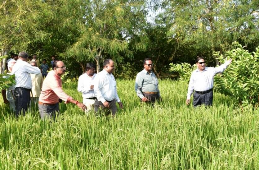 पैदावार बढ़ाने के लिए किसानों को करना होगा यह उपाय