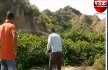 बाजरा की फसल काटने गया था किसान, वहां का नजारा देखकर होश उड़ गए, देखें वीडियो