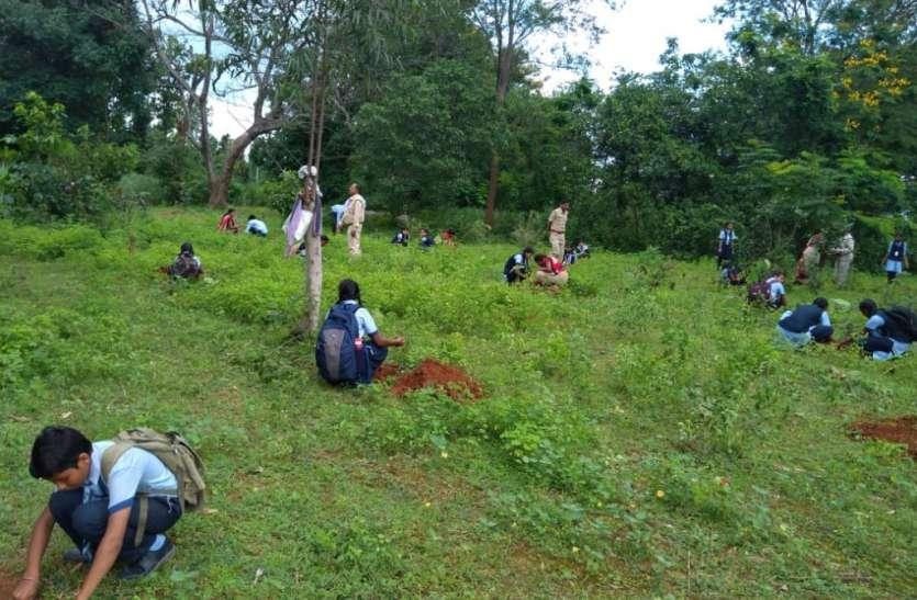शिक्षक के प्रयास से बंजर भूमि पर लहलहा रही हरीतिमा