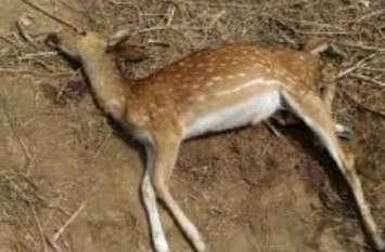 जंगल में हिरन को मार कर खा गए दस लोग, पुलिस ने दो लोगों को किया गिरफ्तार