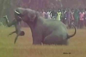 17 हाथियों के दल ने एक किसान को पटक-पटक कर मार डाला, झाड़ियों में मिली क्षत-विक्षत लाश
