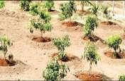 वन मंत्री सिंघार का आरोप : नर्मदा किनारे पौधरोपण में शिवराज सिंह ने किया 450 करोड़ का घोटाला