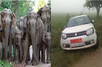 जंगली हाथियों को सामने देख सरपट भागे नेता जी, डेढ़ घंटे तक झाड़ियों में छिपकर बचाई जान