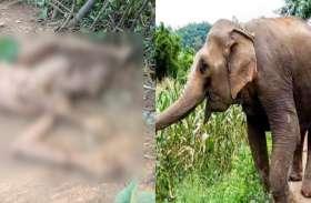 गेंद की तरह हाथी ने किसान को कई बार हवा में उछाला, फिर पटक कर बेरहमी से कुचला दिया
