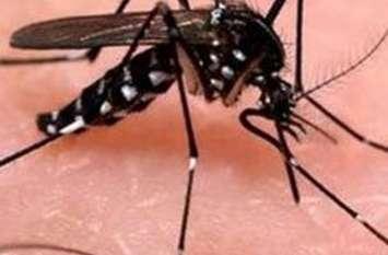 जिले में फैलता जा रहा स्क्रब टाइफस बुखार तो मलेरिया का आंकड़ा पहुंचा ३० पार