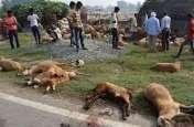 UP: वाहन चालक की लापरवाही से 150 भेड़ों की गई जान, चरवाहे की भी मौत