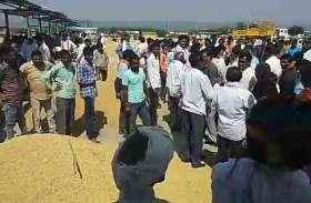 धान के दामों में गिरावट, किसानों के चेहरों पर चिंता की लकीरें