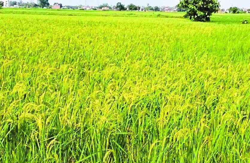 कृषि और सिंचाई उपकरणों के लिए कर सकते है ऑनलाइन आवेदन
