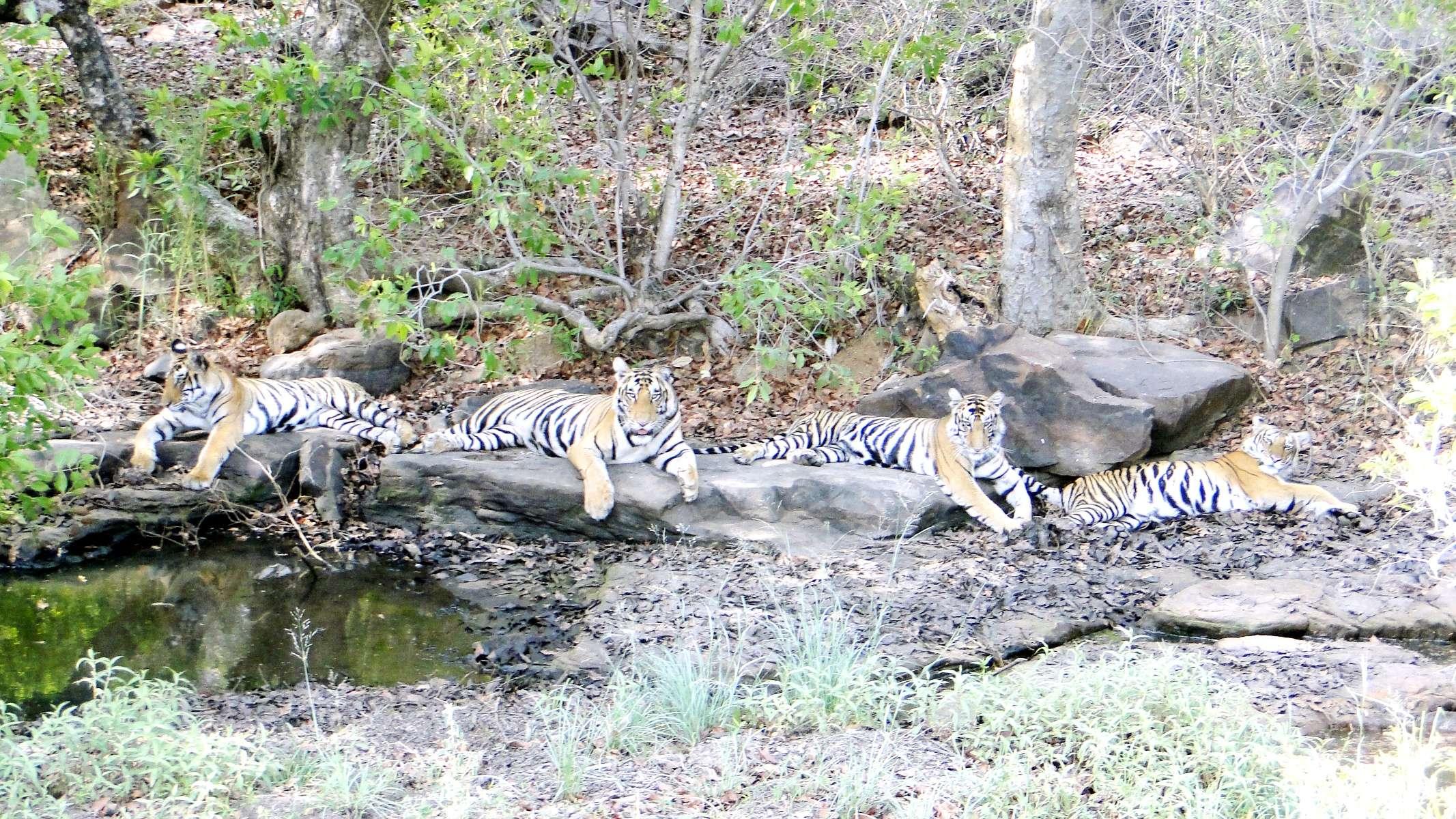 पन्ना नेशनल पार्क panna madhya pradesh