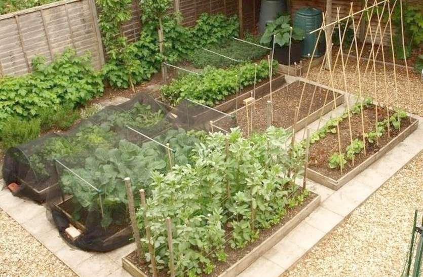 घर में ही उगाइए मौसमी सब्जियां, सीएसए के वैज्ञानिक दो घंटे में देंगे ट्रेनिंग