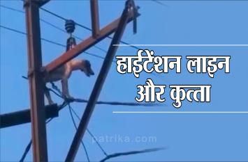 देखिए वीडियो, जब बिजली के खंभे में चढ़ गया कुत्ता, फिर ऐसे आया नीचे
