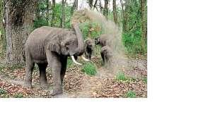 हाथियों पर मिर्चीबम से हमला किया तो...