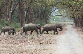 उत्तराखंड : हाथियों पर मिर्च से हमला करने पर प्रतिबंध