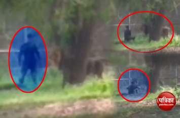 दिल्ली चिड़ियाघर में शेर के बाड़े में घुसा शख्स, देखें वीडियो