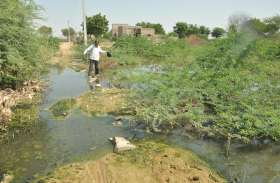 100 बीघा जमीन बन गई दलदल, खेती करना मुश्किल