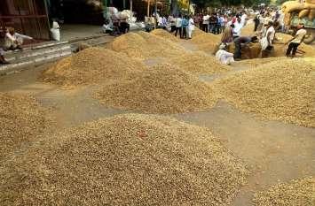 कृषि उपज मंडी में मूंगफली की बंपर आवक