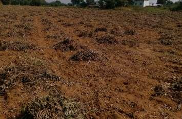 Rain : जयपुर जिले में बारिश के साथ ओलावृष्टि, किसान चिंतित