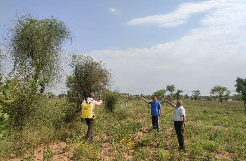 गांवों में से अस्सी प्रतिशत टिड्डियों को मारने का किया दावा