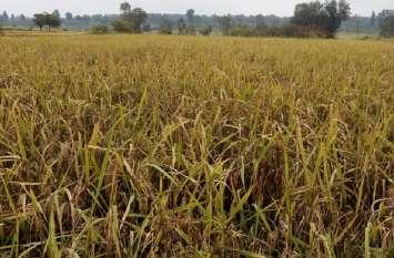 बेमौसम बारिश से किसानों पर संकट